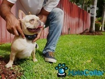 Wearable Pet Tech Reaching New Heights: Halo Collar Releases the First True Smart Pet Collar Allowing Owners to Connect with Their Pets | Quantified Pet | Scoop.it