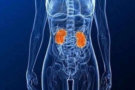 8 Reglas Para mantener sanos tus riñones | Salud&Medicina | Scoop.it