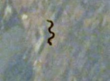 Esobiologia : Il Navigatore Curioso - Notizie di Scienza e Attualità