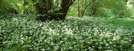 Journée thématique MNHN 5/12/15: sols, biodiversité et climat   ECOLOGIE BIODIVERSITE PAYSAGE   Scoop.it