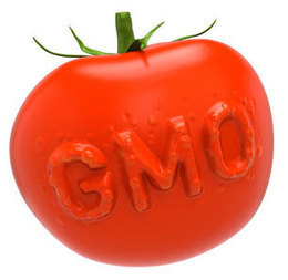 Five Ways the FDA Has Failed Consumers on Genetically Engineered Foods   What's Really In Our Food?   Scoop.it