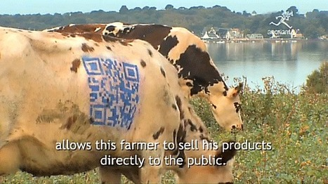 French cows painted with QR codes cause local stir | Informatics Technology in Education | Scoop.it