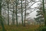Le réchauffement climatique ferait perdre leurs branches aux arbres | sc.environnement | Scoop.it