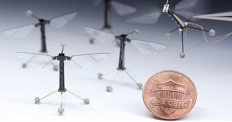 Le plus petit robot volant est une mouche | EntomoNews | Scoop.it