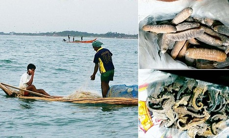 How India's coastal waters are fast becoming a base for easy poaching | Wildlife Trafficking: Who Does it? Allows it? | Scoop.it