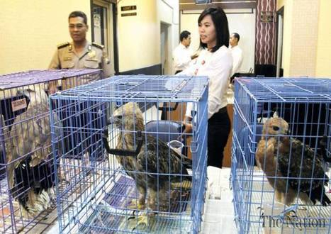 Indonesia arrests man selling protected eagles on Facebook | Wildlife Trafficking: Who Does it? Allows it? | Scoop.it