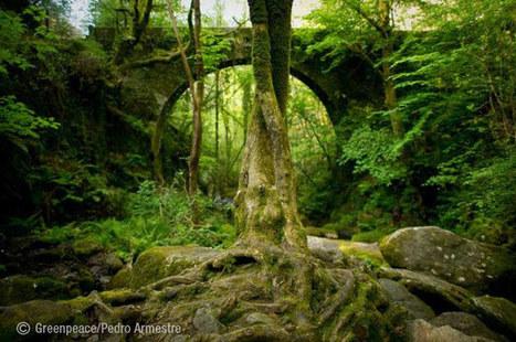 Greenpeace denuncia la destrucción de los bosques primarios y de los océanos y pide su protección | Agua | Scoop.it