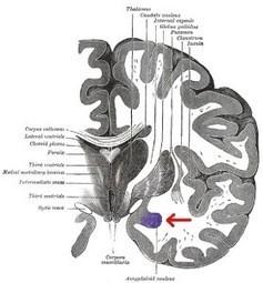 Researchers Point to Brain's 'Dark Side' as Key to Cocaine Addiction   Neuroscienze   Scoop.it