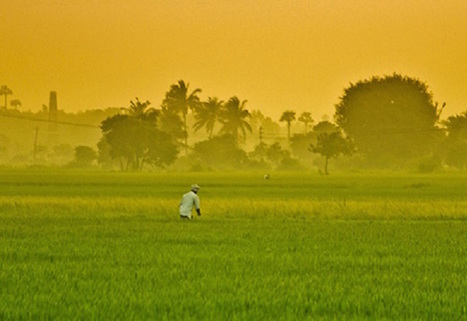#FF #India Blames Heatwave Deaths on #Climate Change | Messenger for mother Earth | Scoop.it