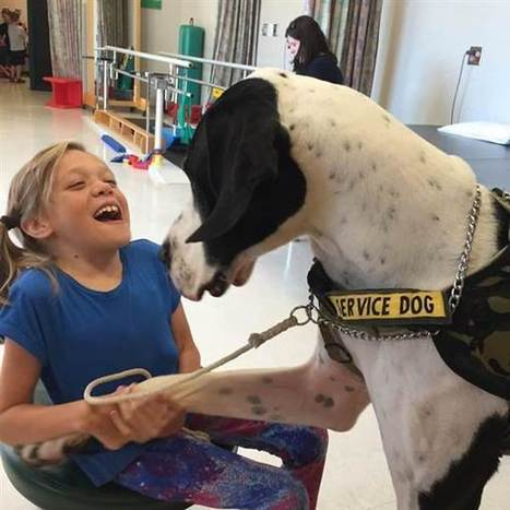 What this service dog did for a girl with rare disorder is amazing | animal connections | Scoop.it