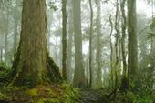 La perte de biodiversité diminue la productivité des forêts - CIRAD | Ecosystèmes Tropicaux | Scoop.it