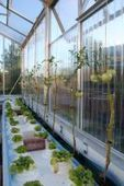 IPS – Urban Farming Takes Root in Europe | Inter Press Service | Vertical Farm - Food Factory | Scoop.it