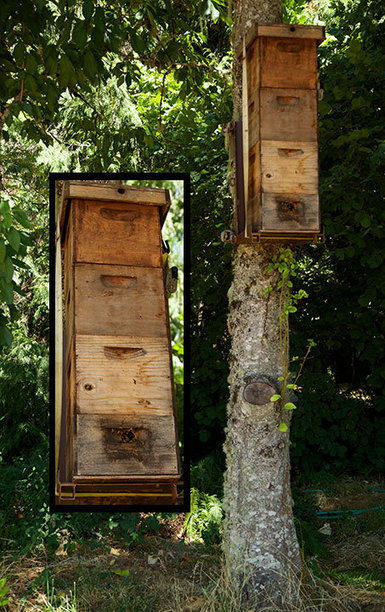 Tree Hive Bees- Scientific Research to Save the Honeybees | Bees and Beekeeping | Scoop.it