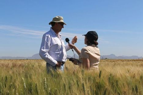 Australian wheat breeders select from Mexican smorgasbord - ABC Online | Lupins | Scoop.it