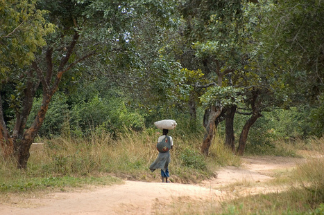 Carbon research in Zambia forests to help build REDD+ strategy | AgroParisTech Ecosystèmes Tropicaux | Scoop.it