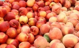 L.monocytogenes in Fruit:  Wawona Fruit Recall extended- Food Safety News | Food safety and sustainability | Scoop.it