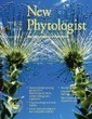 Spatial and temporal variation in plant hydraulic traits and their relevance for climate change impacts on vegetation | Plant Gene Seeker -PGS | Scoop.it