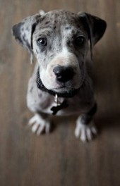 Pindoggy | Dog Pictures - Pindoggy | Scoop.it