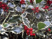 Blog | Christmas Decorations | Scoop.it