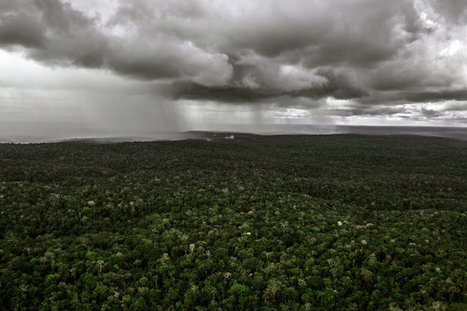 Insect Hordes, Chemical Warfare = Amazing Rainforest Biodiversity! | Rainforest EXPLORER:  News & Notes | Scoop.it
