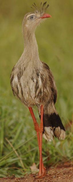 Los pájaros se expandieron desde América del Sur a todo el mundo | Ciencia | EL PAÍS | EcoLegendo | Scoop.it