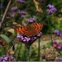 A Wildlife friendly garden: What do you want to know?   My Funny Africa.. Bushwhacker anecdotes   Scoop.it