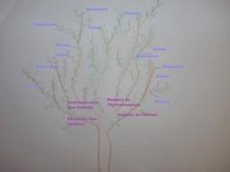L'arbre du bonheur - Visite | Nouvelle conscience | Scoop.it