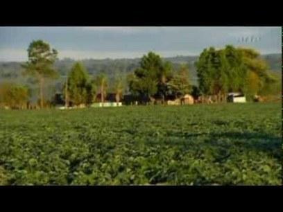 En toute discrétion, l'Union Européenne vient de mettre fin au blocage des OGM   Environnement et developpement durable   Scoop.it