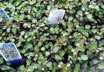 Greenwood Nursery | Butterfly Garden PBL | Scoop.it