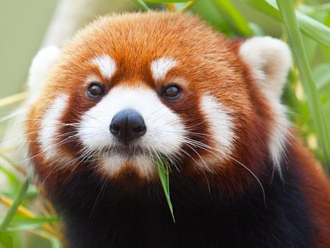 Firefox fait les yeux doux aux développeurs web - Silicon | netnavig | Scoop.it