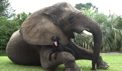 Elephant and dog best friends love playing in the water together (VIDEO) | Dogs | Scoop.it