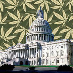 Federal Legislation To Protect Medical Marijuana States Introduced ... | Police Problems and Policy | Scoop.it