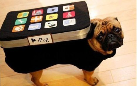 25 Crazy Pet Costumes That Put Yours to Shame   Dude WTF?   Scoop.it