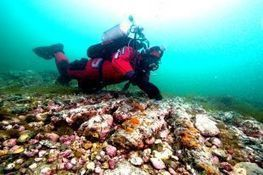 Underwater archeologists helping tell story of Louisbourg siege   Archaeology News   Scoop.it