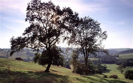 Bats and Chalara dieback of ash trees | 100 Acre Wood | Scoop.it