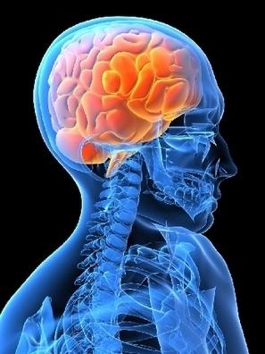 Neuroscienze, ecco i 6 stili emozionali con cui affrontiamo il mondo - Centro Meteo Italiano | Neuroscienze | Scoop.it