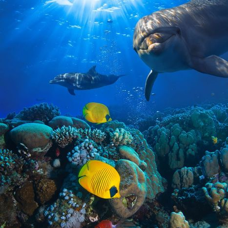 The 50 most amazing photos and videos of the oceans | GarryRogers Biosphere News | Scoop.it