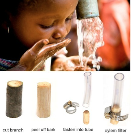 Looking to Nature: Low-Tech Xylem Water Filtration   Sustainable Technology   Scoop.it