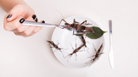 The challenges of selling insects in Europe | Entomophagy: Edible Insects and the Future of Food | Scoop.it