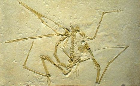 Pterodactyls Are Not Dinosaurs.  So What The Hell Are They? | Strange days indeed... | Scoop.it