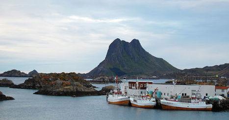 La chasse à la baleine bat des records en Norvège | Environnement | Scoop.it