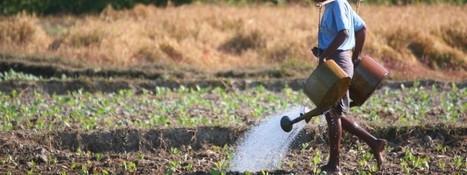 Rapport 2011 de la FAO : Agriculture Mondiale, prévision 2015 | Spiruline solidaire et équitable | Scoop.it