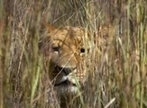 YouTube video draws focus to trophy hunting in SA | Kruger & African Wildlife | Scoop.it