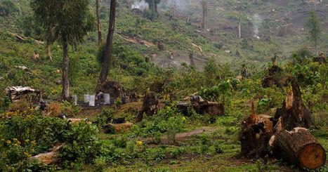 RDC: Greenpeace dénonce l'attribution illégale de concessions forestières à des opérateurs chinois | Options Futurs Rio+20 | Scoop.it