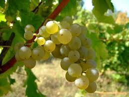 Love Sauvignon Blanc? Try White Bordeaux | Planet Bordeaux - The Heart & Soul of Bordeaux | Scoop.it