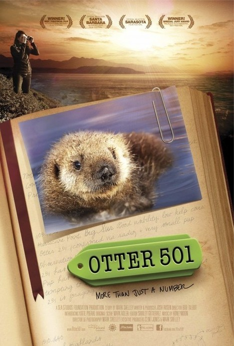 Otter 501 | All about nature | Scoop.it