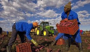La RD Congo mise sur les parcs agro-industriels | Questions de développement ... | Scoop.it