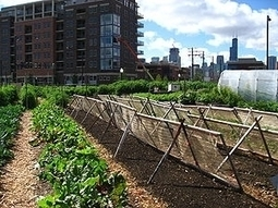 Imagining Skyscraper Farms - Forbes | Sustainable Urban Agriculture | Scoop.it