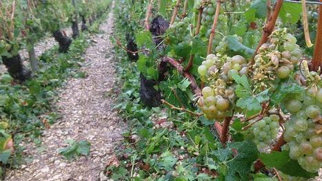 Provence : quand des vignerons acceptent d'enfouir des déchets sous leur cépage | Le vin quotidien | Scoop.it