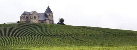 Champagne Harvest Bubbling Away Nicely | Wine News & Features | Grande Passione | Scoop.it